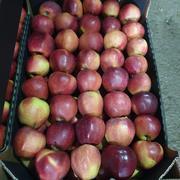 Калиброванные яблоки